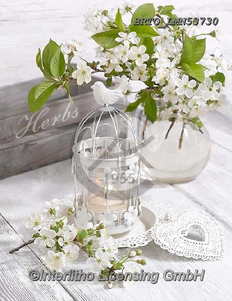 Alfredo, FLOWERS, BLUMEN, FLORES, photos+++++,BRTOLMN53730,#f#, EVERYDAY