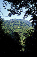 Forested mountains in the Parque Nacional Pico Bonito, the largest national park in Honduras. Taken from the grounds of The Lodge at Pico Bonito, a luxurious ecolode near La Ceiba, Honduras.