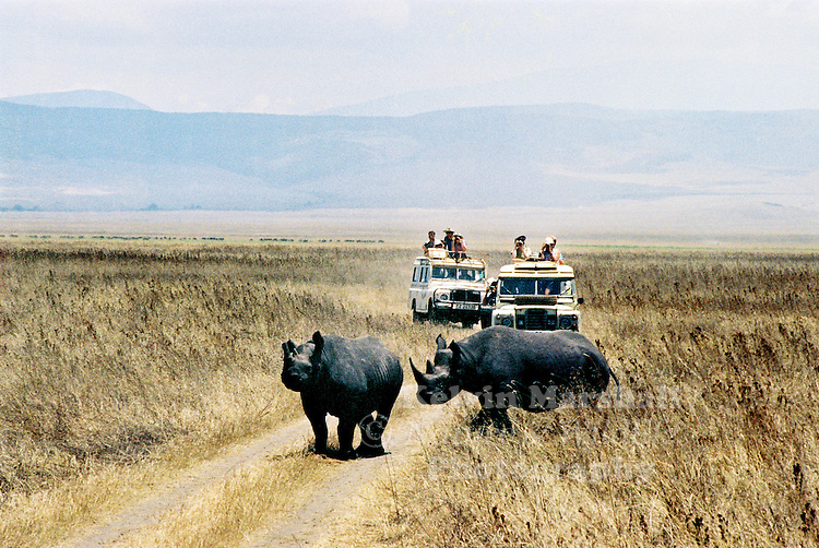 White rhino inhabit the Ngorongoro Crater (Tanzania) also call a caldera. There are two types of rhinoceros: black (pointed lip) and white (square upper lip and more endangered).