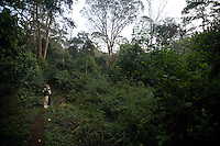 20080131_Periyar, India_ A view of the plant diversity of the woods of the Periyar Wildlife Sancuary in the Southern Indian state of Kerala.  Photographer: Daniel J. Groshong/Tayo Photo Group