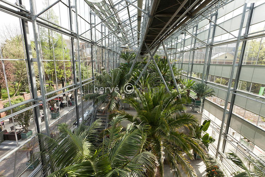 Hollande, Leyde, Hortus Botanicus, jardin botanique de l'Université de Leyde, il est le plus vieux jardin botanique des Pays-Bas  et un des plus vieux au monde, la serre moderne où une passerelle surplombe les cycadales // the modern greenhouse where a bridge overlooking the cycads
