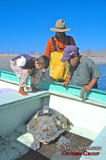 J. Nichols Showing Turtle To Children