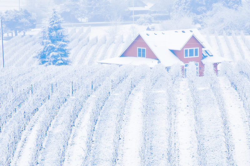Sokol Blosser Vineyards with snow, fog and farm house. Oregon