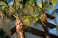 Palm trees and condominiums which overlook Gulf of Mexico.  Indian Shores Tampa Bay Area Florida USA