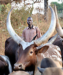 Cattle being herded along a road in Southern Sudan... NOTE: In July 2011, Southern Sudan became the independent country of South Sudan