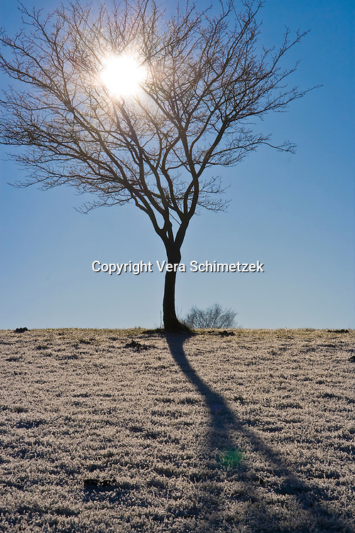 Europe, DEU, Germany, North Rhine-Westphalia, winter tree....Europa, DEU, Deutschland, Nordrhein-Westfalen, Baum im Winter......[Copyright / Contact: Vera Schimetzek, Bornstrasse 5, 58300 Wetter, Germany, cell: 0049.(0)151.21220918, schimetzek@web.de, www.schimetzek-foto.de, publication is subject to a fee and report, the General Terms and Conditions apply. Die Veroeffentlichung ist melde- und honorarpflichtig, die AGB sind bindend.]