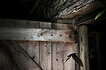 A Barn swallow flying out of a stable door. The bird was frozen using a short bust of flash with the camera being fired by remote control. Near Corwen, north Wales.