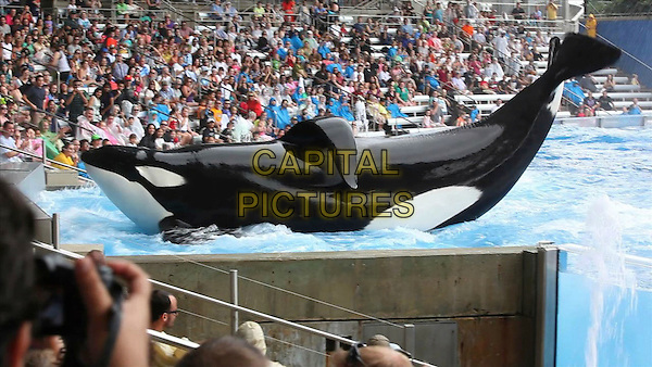 TILIKUM<br /> in Blackfish (2013) <br /> *Filmstill - Editorial Use Only*<br /> CAP/FB<br /> Image supplied by Capital Pictures