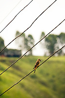 Bird on a wire in Ouro Preto, Minas Gerais, Brazil, South America, 2007, © Stephen Blake Farrington