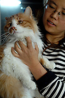A cat that was rescued from a Government compound that was in terrible condition. Half of the rescued animals died. Cats are being abandoned in large numbers and are ending up in Government compounds where they slowly die.