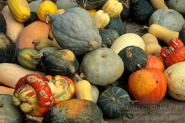 Gourds, Gowans Oak Tree produce stand, near Philo, Anderson Valley, Mendocino County, California