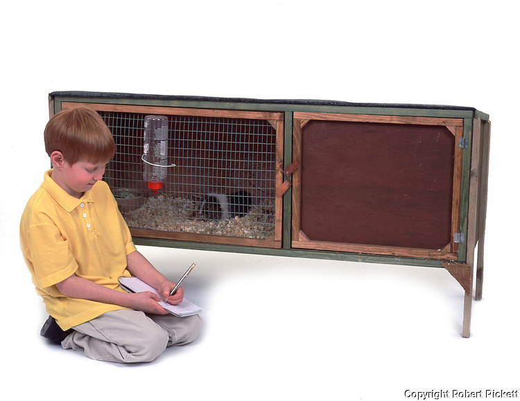 Young Boy writing list of how to look after Pet Guinea Pig, Aged 7 years old, hutch, studio, white background, cut out, domestic