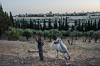 Sami Salim puts a white mare through her paces, as the minarets and steeples of Jerusalem's Old City and the golden Dome of the Rock are seen on June 07, 2016 at a stable above the Garden of Gethsemane in Tur, East Jerusalem. <br /> Photo Daniel Berehulak for the New York Times