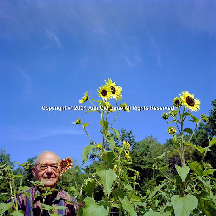 Retired man in Sunflower garden with blue sky behind