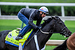 LOUISVILLE, KENTUCKY - APRIL 28: Win Win Win, trained by Michael Trombetta, exercises in preparation for the Kentucky Derby at Churchill Downs in Louisville, Kentucky on April 28, 2019. John Voorhees/Eclipse Sportswire/CSM