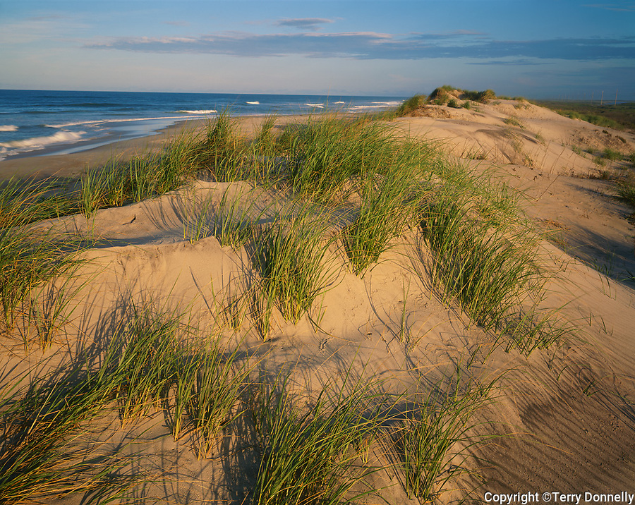 Pea Island, NWR, NC: Evening sun on Cape Hatteras barrier dunes and beach grasses above the Atlantic surf