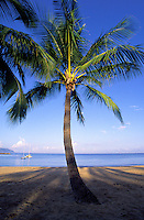 A small palm tree stands invitingly in the shade at Haleiwa Beach park on the island of Oahu.