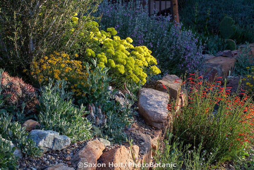 Eriogonum umbellatum polyanthum 'Shasta Sulfur' flowering by stone wall David Salman New Mexico xeric rock garden