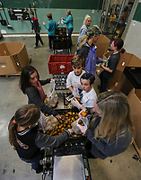 Feb. 20, 2019. San Diego, CA. USA| Volunteers from Bird Rock Elementary School package pears at the Feeding San Diego.warehouse.  | Photos by Jamie Scott Lytle. Copyright.