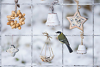 Kohlmeise, Futtergitter für Vögel, Vogelfutter-Spalier, Vogelfutter-Gitter, Selbstgemachtes Vogelfutter, Vogelfütterung, Fütterung, Fettfuttermischung, Fettfutter, Meisenknödel, Erdnusskette, Erdnüsse, Erdnusskette, Erdnussring, Erdnuß, Vogelfutterspalier, Vogelfuttergitter, Winterfütterung, Kohl-Meise, Meise, Meisen, Parus major, Great tit, bird's feeding, La Mésange charbonnière. Adventskalender für Vögel, Advent, Weihnachten für Vögel