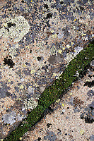 Lichen and moss grow on bedrock at the top of Mount Siskiwit, near the Greenstone Ridge Trail in Isle Royale National Park, Michigan.<br /> <br /> &copy; Michael Forster Rothbart<br /> www.mfrphoto.com <br /> 607-267-4893 o 607-432-5984<br /> 5 Draper St, Oneonta, NY 13820<br /> 86 Three Mile Pond Rd, Vassalboro, ME 04989<br /> info@mfrphoto.com<br /> Photo by: Michael Forster Rothbart<br /> Date: 7/2004    File#:  color slide