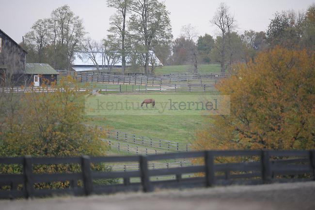 A horse grazes in its field near Keeneland racetrack in Lexington, Ky., on Sunday, Oct. 23, 2011. Photo by Tessa Lighty | Staff
