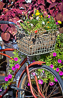 Old bicycle and flowers in historic Eureka Springs Arkansas.