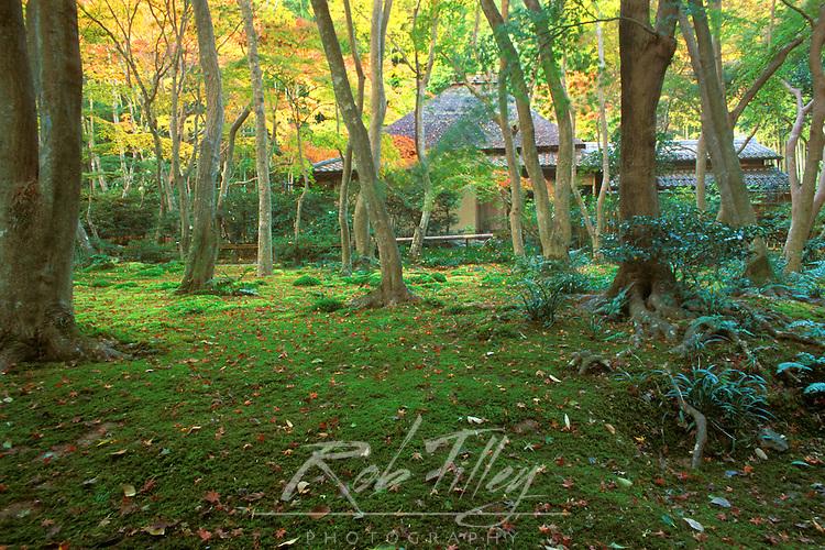 Japan, Kyoto, Arashiyama, Giohji Temple