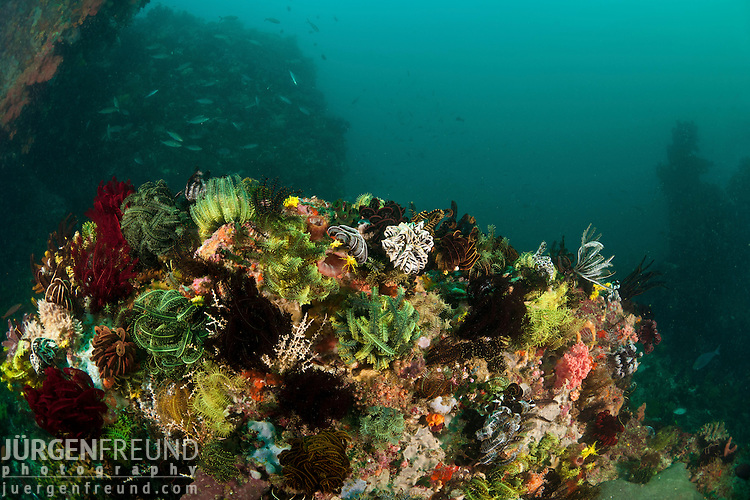 Reef studded with featherstars