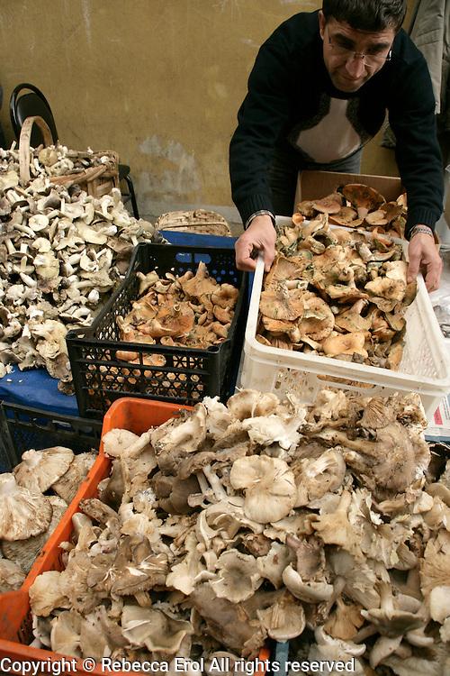 Wild mushrooms for sale in a market in Fener, Istanbul, Turkey