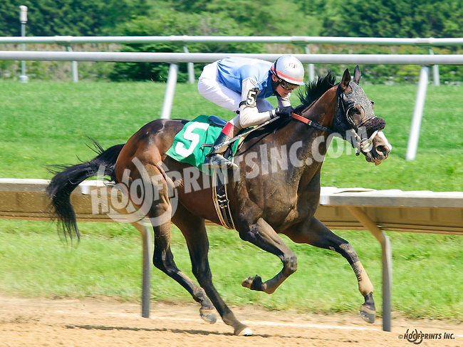 Cold Facts winning at Delaware Park on 6/1/16