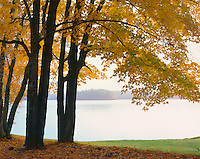 Northern Highlands State Forest, WI: Carrol Lake framed by maple and birch trees in fall color