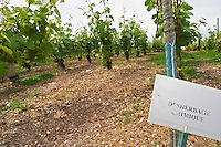 Experiment with chemical weed killer with a sign saying that the soil has been treated with herbicides (desherbement chimique) and there is no grass growing at the experimental vineyard of the CIVC at Plumecoq near Chouilly in the Cote des Blancs It is used for testing clones soil treatment vine treatments spraying, Champagne, Marne, Ardennes, France