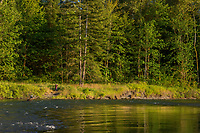 Bird watching along Nisqually River, WA.  July.