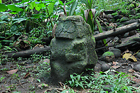 Stone carved tiki sculpture in grey keetu or volcanic tuff, with blunt facial features, wearing a crown and with hands on either side of the belly, at Te Fiifii, a religious sanctuary or meae, built by the pre-European Marquesian civilisation, 80m South West of the Iipona archaeological site, near the village of Puamau, on the island of Hiva Oa, in the Marquesas Islands, French Polynesia. This tiki is thought to have originally been on the North side of the paepae or platform. Tiki sculptures are usually carved in wood or stone and represent Ti'i, a half-human half-god ancestor who is believed to be the first man. Tiki often have a huge head, symbolising power, and big eyes symbolising knowledge. Tiki are respected and are often placed outside houses as protective statues. Picture by Manuel Cohen