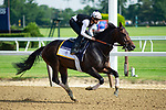 ELMONT, NY - JUNE 08:  Gronkow gallops around the track as horses prepare on Friday for the 150th running of the Belmont Stakes at Belmont Park on June 8, 2018 in Elmont, New York. (Photo by Kaz Ishida/Eclipse Sportswire/Getty Images)