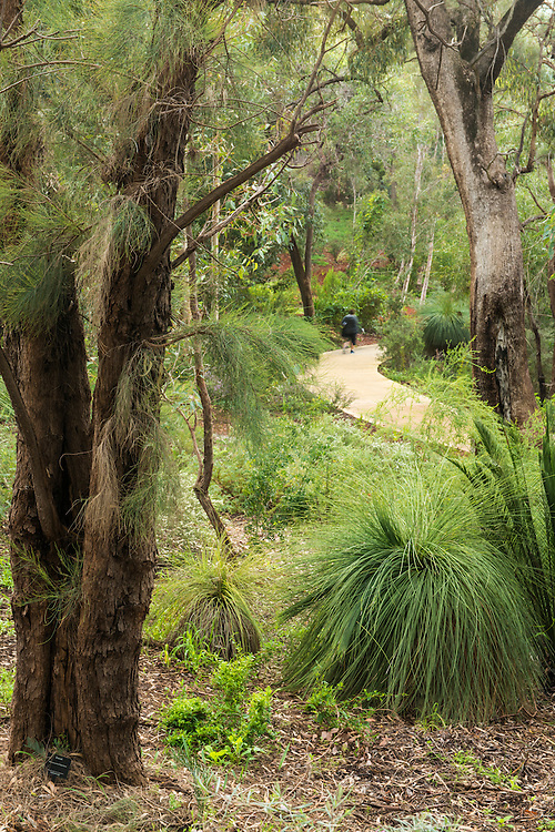 Kings Park Botanic Gardens, Perth.