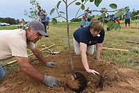 NWA Democrat-Gazette/FLIP PUTTHOFF <br /> FRUIT TAKING ROOT<br /> Rico Montenegro (left) and Debbie Rambo plant a persimmon tree Saturday June 17 2017 at the new location of the Samaritan Community Center garden at South Eighth Street and Pleasant Grove Road in Rogers. The garden is being moved in phases from its current location at the Samaritan Community Center in Rogers to the larger space, said Rambo, who is executive director of Samaritan Community Center. Volunteers planted 50 apple, pear and persimmon trees Saturday and a deer-proof fence was erected. The Fruit Tree Planting Foundation donated the trees, said Montenegro, who is with the The Fruit Tree Planting Foundation.