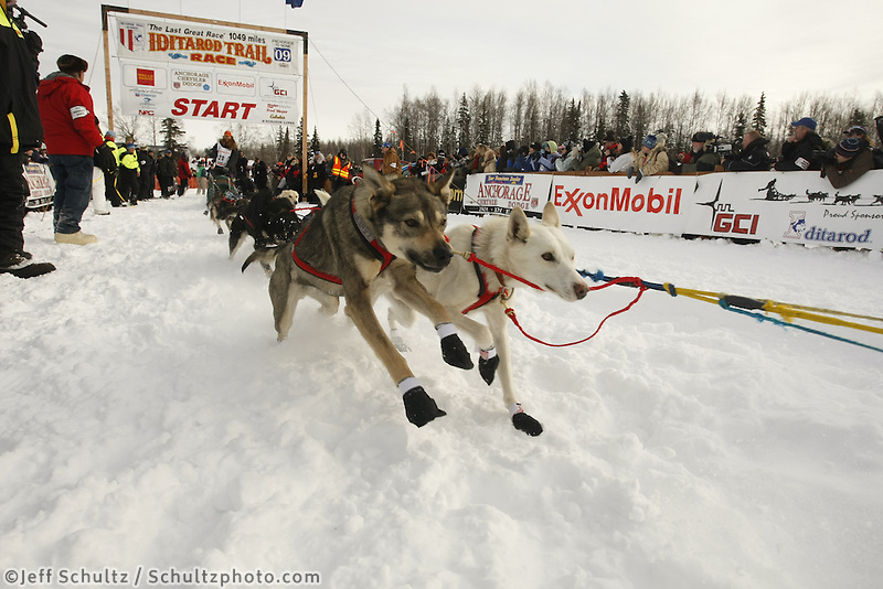 Trent Herbst team pours on the coals at the start line on Sunday during the restart day of Iditarod 2009 in Willow , Alaska