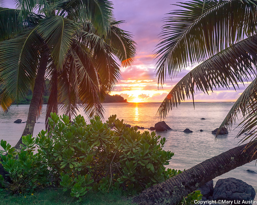 Kauai, HI: Palm trees frame the sunset at Anini beach on Kauai's north shore