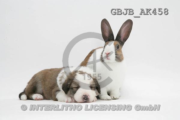 Kim, ANIMALS, fondless, photos(GBJBAK458,#A#) Tiere ohne Fond, animales sind fondo