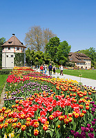 DEU, Deutschland, Baden-Wuerttemberg, Bodensee: Insel Mainau, Blumeninsel und groesste touristische Attraktion am Bodensee. Tulpenbeete vor dem Gaertnerturm und Torbogenhaus | DEU, Germany, Baden-Wuerttemberg, Lake Constance: Mainau Island, Flower Island and greatest tourist attraction at Lake Constance. Tulips and Gardener Tower