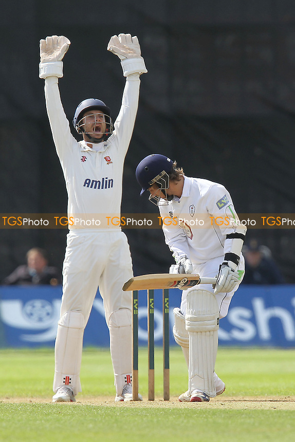 James Foster of Essex appeals successfully for the wicket of Paul Borrington - Derbyshire CCC vs Essex CCC - LV County Championship Division Two Cricket at the County Ground, Derby - 30/08/12 - MANDATORY CREDIT: Gavin Ellis/TGSPHOTO - Self billing applies where appropriate - 0845 094 6026 - contact@tgsphoto.co.uk - NO UNPAID USE.