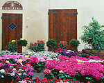 Tuscany, Italy:  A street scene of summer garden flowers for sale in front of two wooden doors in the hill town of Pienza