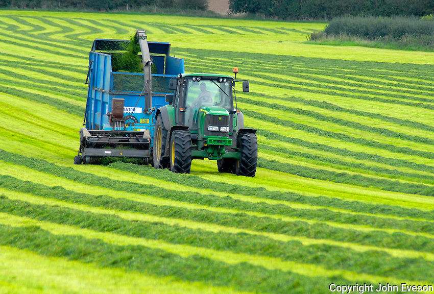 Taking third-cut silage on D. R. and C. F. Cantrill's Field House Farm, Levedale, Staffordshire. It will be fed to the farm's 270 commercial Holstein Friesian milkers.