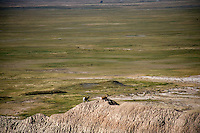 Desert bighorn sheep stand on a hilltop in the Badlands National Park in South Dakota, USA..