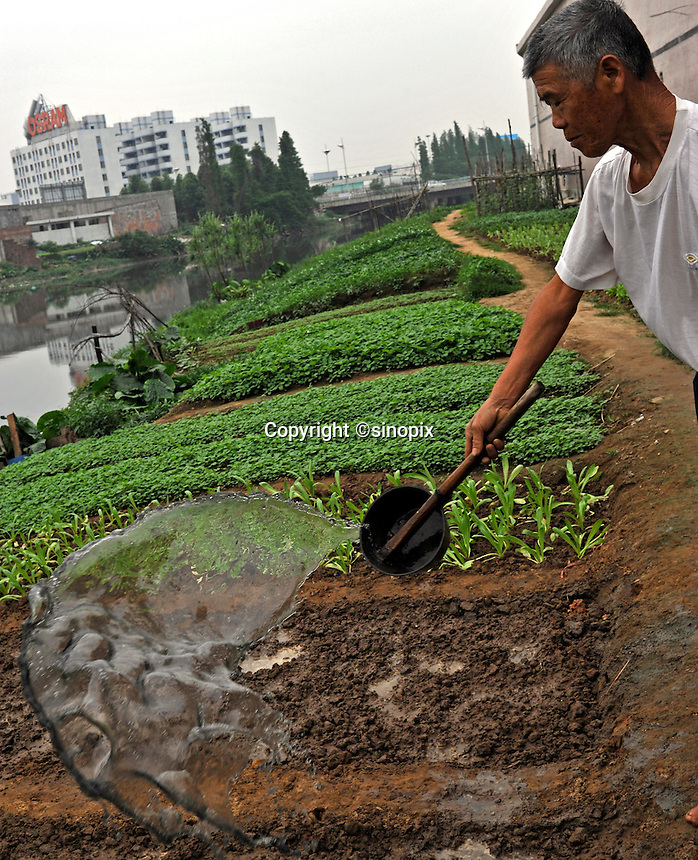 A farmer throws black water from the river onto his crops in front of the Osram factory in Foshan, Guangdong Province, China. Osram makes light-bulbs, including energy saving light-bulbs that use mercury as the active component.