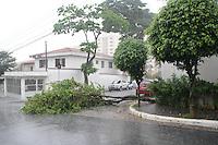 SAO PAULO, SP, 10.03.2016 - QUEDA-ARVORE - Devido &agrave; chuva e ventos, &aacute;rvore cai e bloqueia o acesso &agrave; rua Iep&ecirc;, regi&atilde;o de Santo Amaro na zona sul de S&atilde;o Paulo, na manh&atilde; desta quinta-feira, (10) <br /> (Foto: Fabricio Bomjardim/Brazil Photo Press)