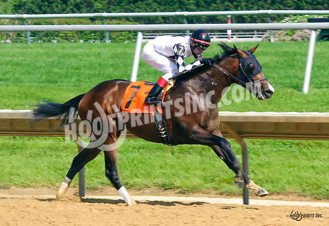 Nate's Tizzy at Delaware Park on 6/1/16