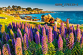 Tom Mackie, LANDSCAPES, LANDSCHAFTEN, PAISAJES, photos,+America, California, North America, Pacific Grove, Pacific Ocean, Pride of Madeira, Tom Mackie, USA, bay, beach, beaches, blo+om, blooming, botanical, coast, coastal, coastline, coastlines, flower, flowers, holiday destination, horizontal, horizontals+landscape, landscapes, ocean, scenic, tourist attraction, travel, wildflower, wildflowers,America, California, North America+, Pacific Grove, Pacific Ocean, Pride of Madeira, Tom Mackie, USA, bay, beach, beaches, bloom, blooming, botanical, coast, c+,GBTM170139-1,#L#, EVERYDAY